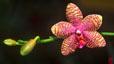 orchid_01.jpg