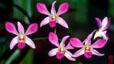 orchid_02.jpg