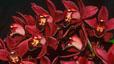 orchid_11.jpg