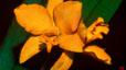 orchid_12.jpg