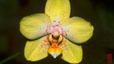 orchid_13.jpg