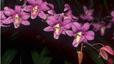 orchid_14.jpg