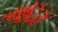 orchid_15.jpg