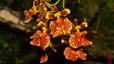 orchid_16.jpg