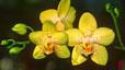orchid_18.jpg