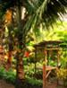 hawaii_vert_04.jpg