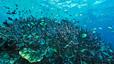 undersea_01.jpg