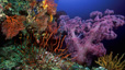 undersea_03.jpg