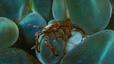 undersea_06.jpg