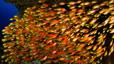 undersea_07.jpg