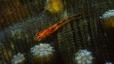 undersea_08.jpg