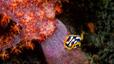 undersea_09.jpg
