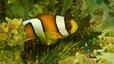undersea_10.jpg