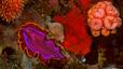 undersea_16.jpg
