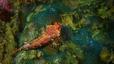 undersea_17.jpg