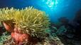 undersea_22.jpg