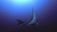 undersea_24.jpg