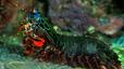 undersea_25.jpg