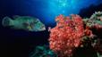 undersea_26.jpg