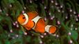 undersea_28.jpg