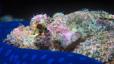 undersea_32.jpg