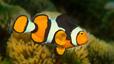 undersea_33.jpg