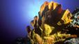 undersea_36.jpg