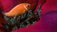 undersea_37.jpg