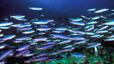 undersea_40.jpg