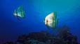undersea_42.jpg