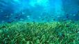 undersea_46.jpg