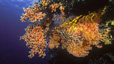 undersea_51.jpg