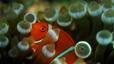 undersea_52.jpg
