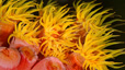 undersea_55.jpg