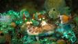 undersea_58.jpg
