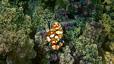 undersea_60.jpg