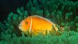 undersea_61.jpg