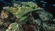 undersea_62.jpg