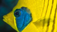 undersea_63.jpg