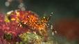 undersea_65.jpg