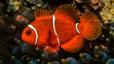 undersea_66.jpg