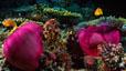 undersea_67.jpg