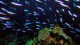undersea_73.jpg