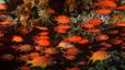 undersea_75.jpg