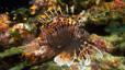 undersea_78.jpg