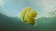 undersea_79.jpg