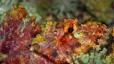 undersea_86.jpg