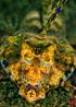 undersea_v_04.jpg
