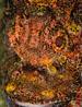 undersea_v_05.jpg