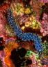 undersea_v_06.jpg